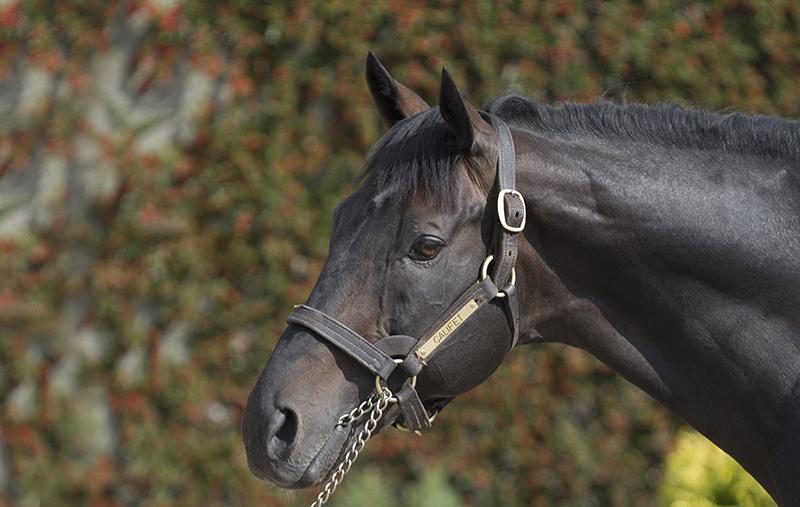 Califet Stallion standing at Boardsmill Stud
