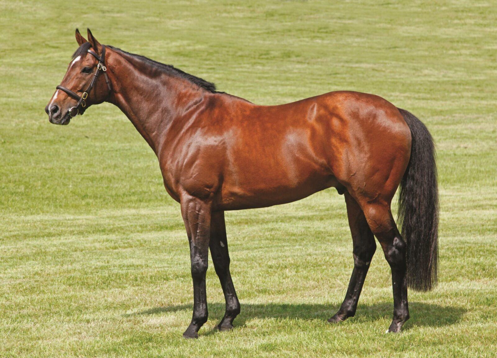 Mount Nelson Stallion from Boardsmill Stud